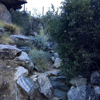 The trail is not difficult to find up to the saddle. Lots of cairns. After that...we lost it and