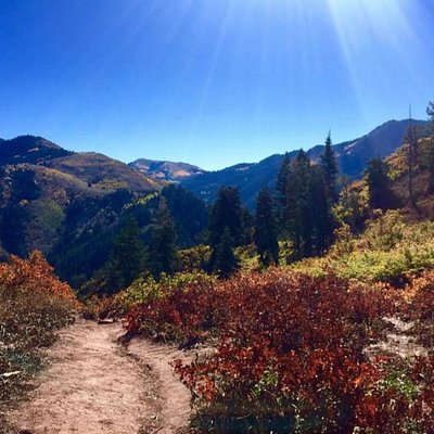 View at top of Elbow Fork trail. [Taken 10/2/15]
