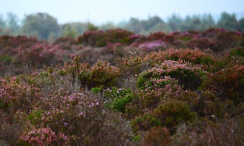 The Moss or Bog - higher than the ground surrounding, piled up over Millennia