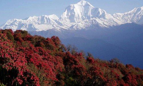 mountain everest Nepal