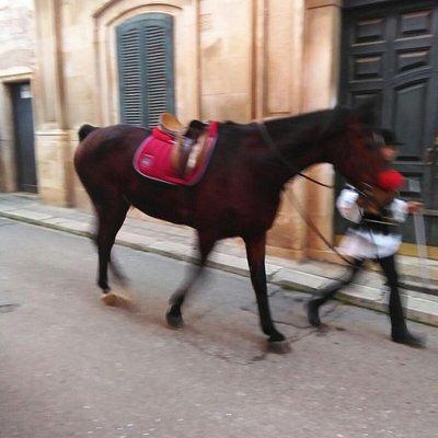 Cavallo e fantino
