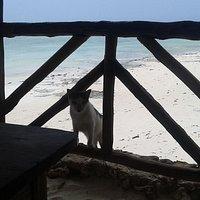 Вид на пляж и кошек из-за столика