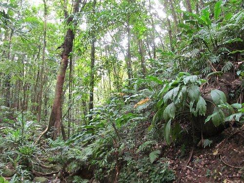 beautiful tropical rain forest.