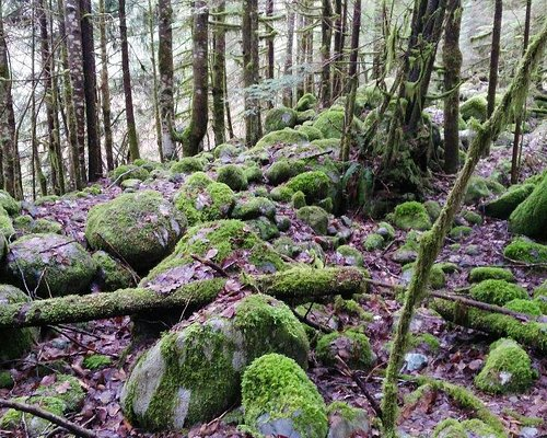 love the trail