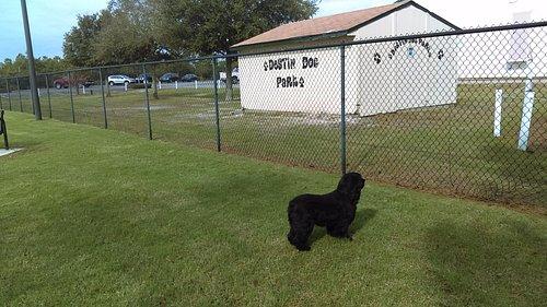 Our dog enjoying dog park!