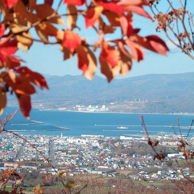 円山展望台からの岩内港(秋)