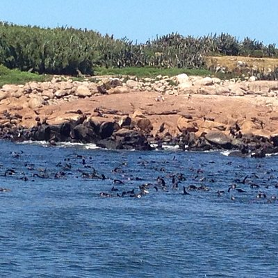Sea lions everywhere around the island reserve!