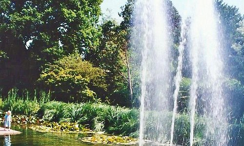 The pond contains lillies, and fish with the waterfall feature in the front