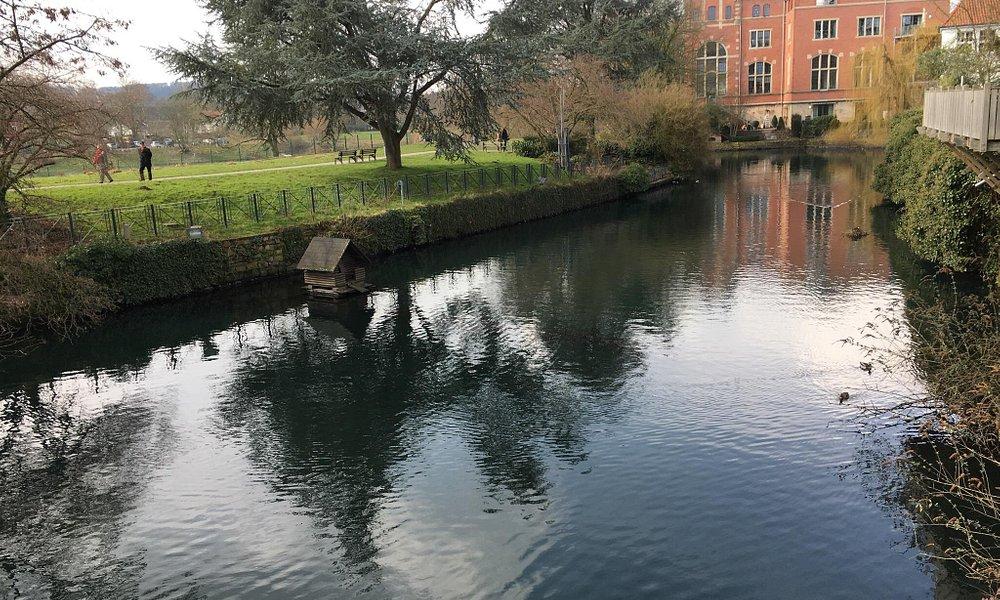 Se puede apreciar los patos que están en el estanque