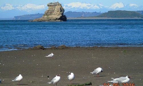 Aves espalhadas pela praia...