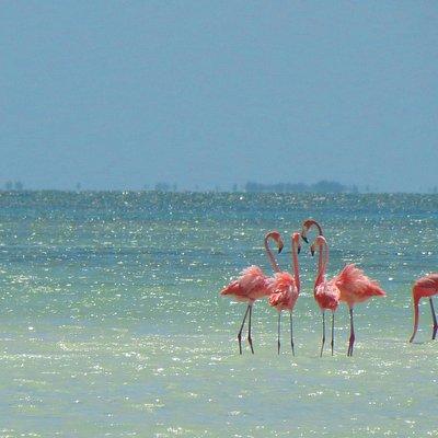 Flamingos close to Passion Island | Holbox Day Trip