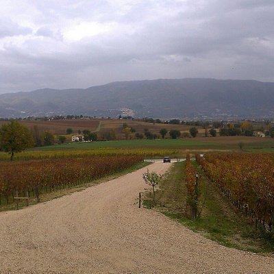 Azienda Vinicola Tabarrini