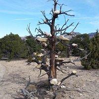 Luke's trademark - many trees with balanced rocks