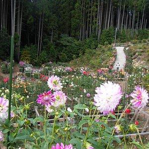 星の花公園