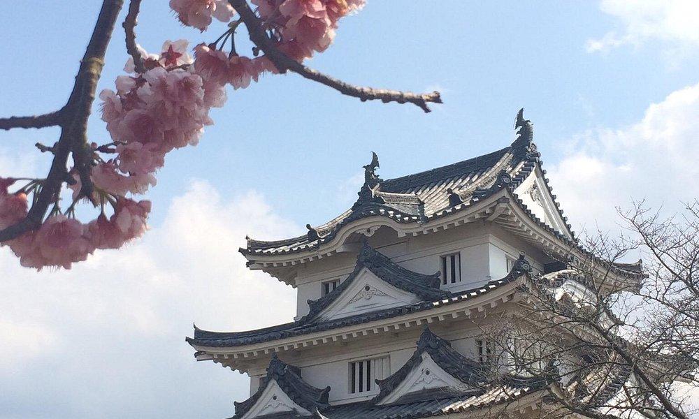 Uwajima castle and Taiwan cherry.