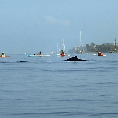 Whale watching from a Kayak!
