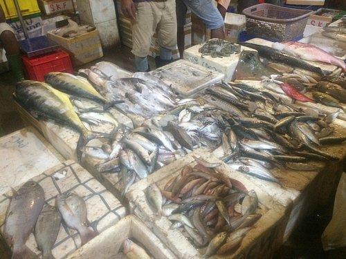 Poranna wizyta na targu rybnym w Negombo