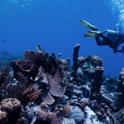 Foto subacuatica en un bello arrecife