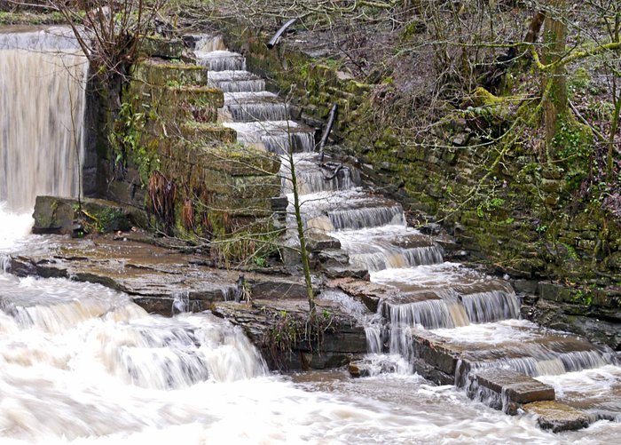 Salmon Ladder at the Weir