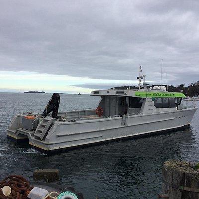 Aurora leaving the wharf