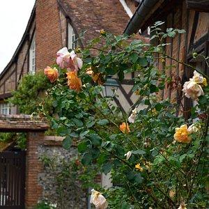 Gerberoyの村内に咲く薔薇