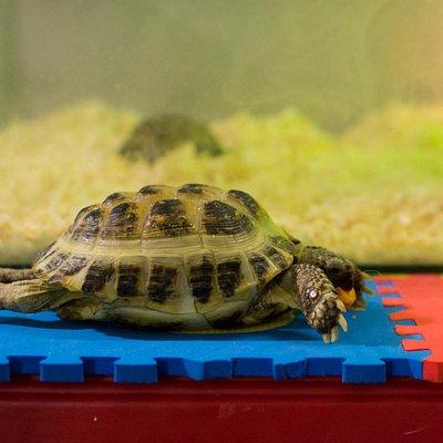 Черепаха. Контактный зоопарк
