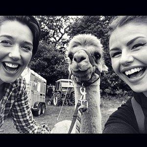 TV star Lothario with some of his adoring fans on a Beacon alpaca walk