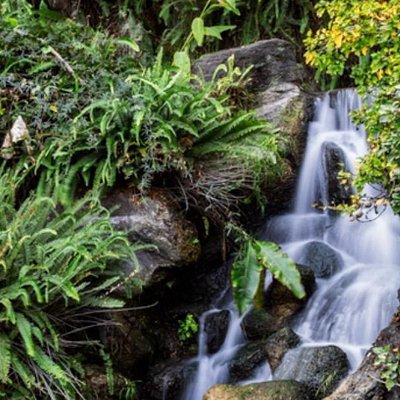 LA Arboretum -21