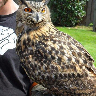 1 van de uilen waarmee ze vlogen