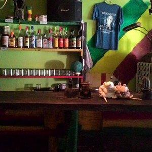 krysaci na baru