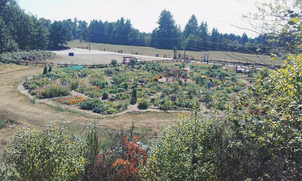 Community garden view