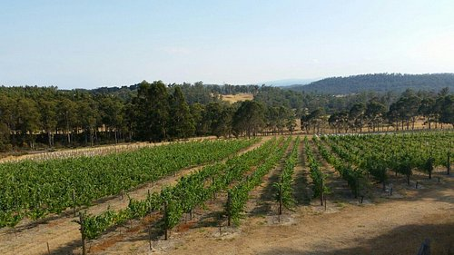 Beautiful views & lovely picnic area amongst the vines.