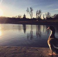 Un parque muy tranquilo y bonito.