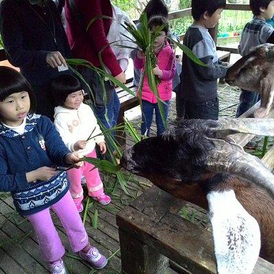 讓小寶貝親手餵羊近距離觀察動物