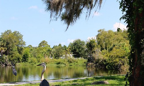 blue heron. not phased at all by my presence.