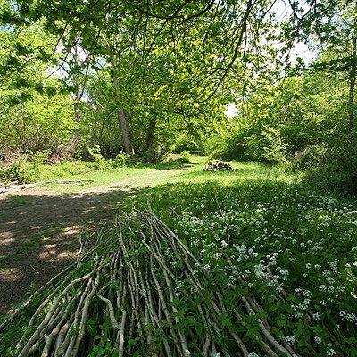 Bradfield Woods in the May sunshine. By Steve Aylward.