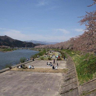 Cherry trees blossoms at Hinokinai River in Kakunodate