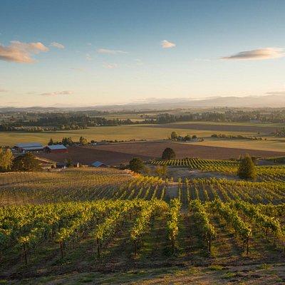 Beautiful Oregon wine country at Keeler Estate Vineyard
