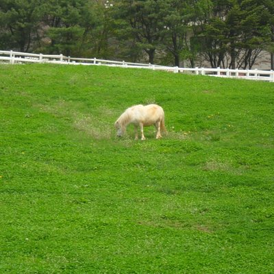 종마목장에 있는 당나귀 사진
