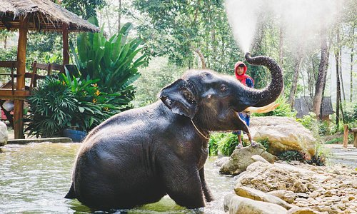 Baramee & his mahout in the pool
