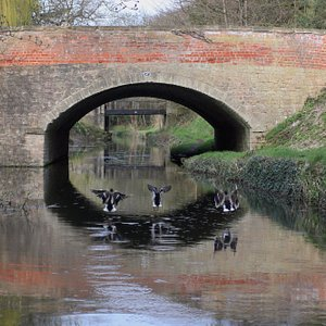 Ducks on the canal