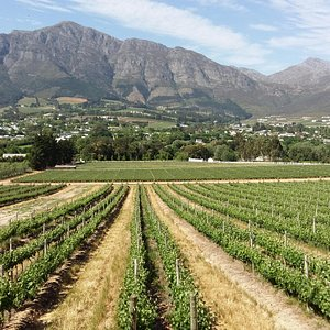 Views of the Franschhoek valley