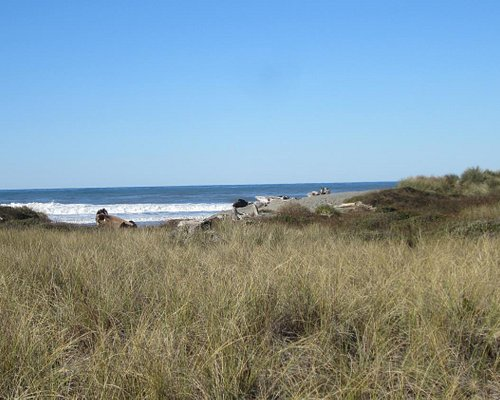 After a good walk through the trees you come out onto the grassy dunes and finally to the ocean