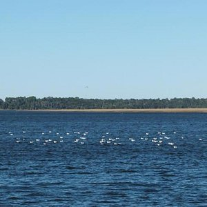 """Grover """"Island"""" marsh in Crooked River mouth"""