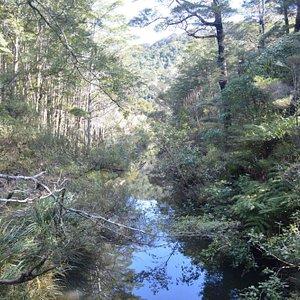 butterfly-creek.jpg?w=300&h=300&s=1