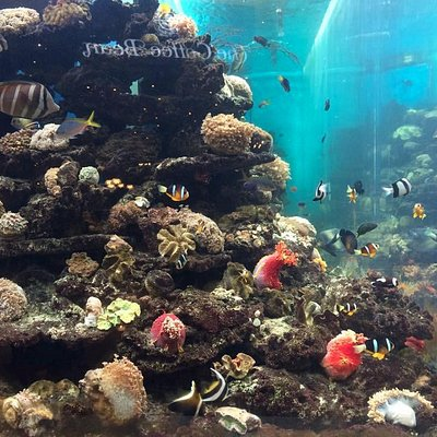 Large fish tank right at the entrance