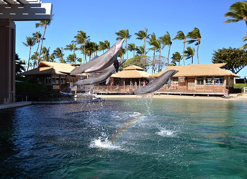 Dolphin Quest Hawaii