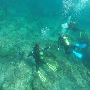 No fundo do oceano | In the bottom of the ocean