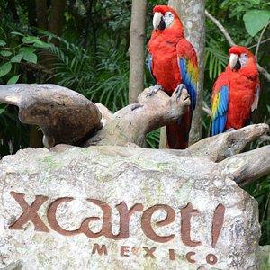 Excursiones Riviera Maya y Mas