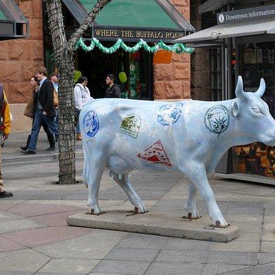 A bull on 16th street.